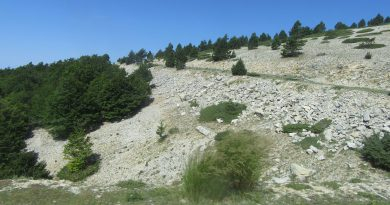 Mont-Ventoux-up-from-Chalet-Renard
